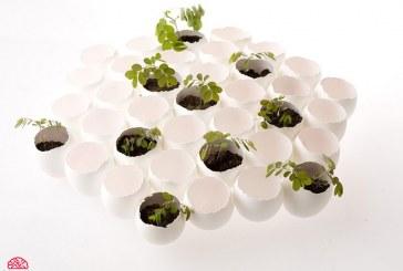 گلدان تخممرغی