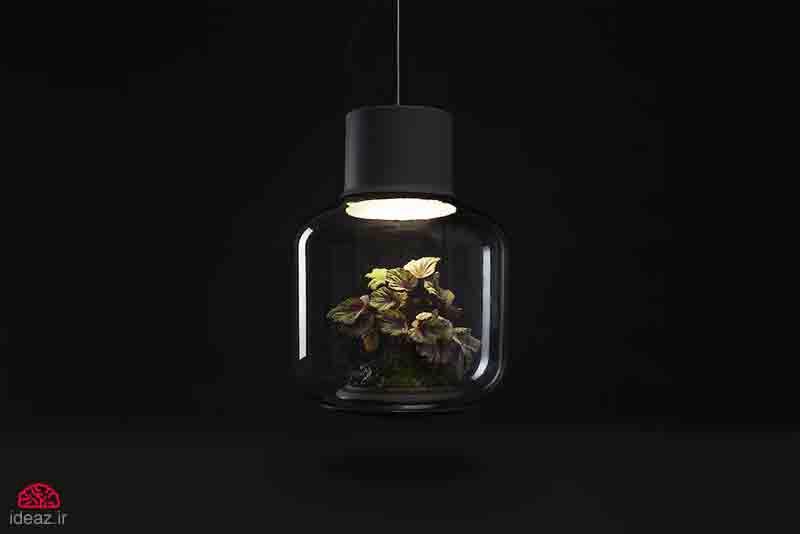 آیدیاز - لامپ تراریوم