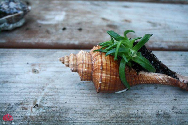 آیدیاز - گیاهان حلزونی