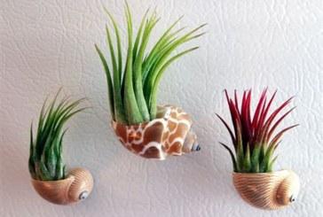 گیاهان حلزونی بسازید!